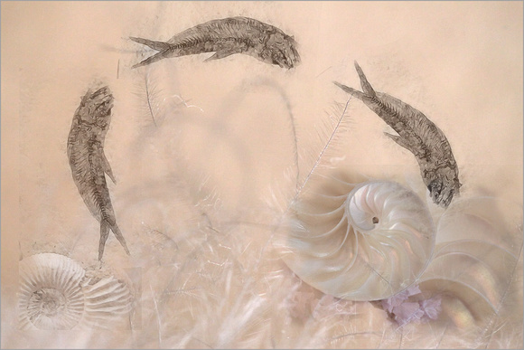 Flying Fish Fossils